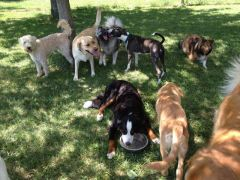 dogs-playing-in-shade.jpg