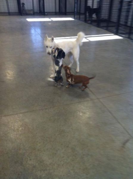 Dog Boarding Iowa